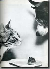 b 犬と猫jpg