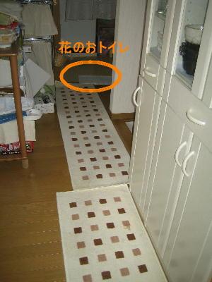 20070727f.jpg