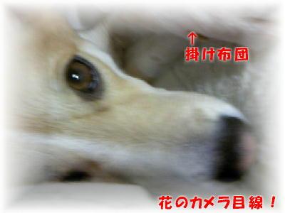 TS380002b.jpg