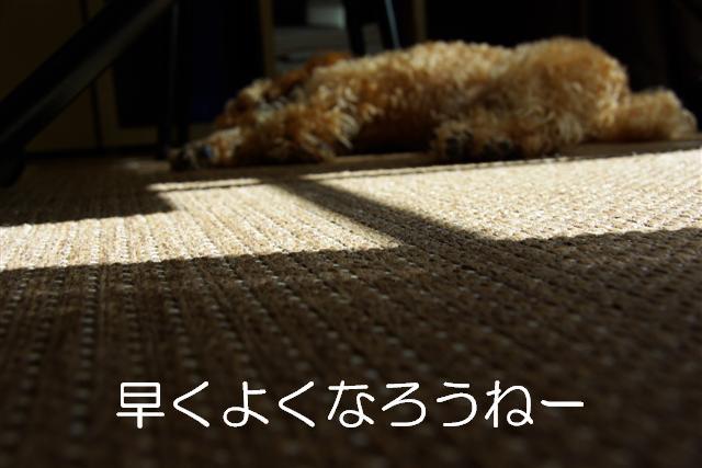 20071021184221.jpg