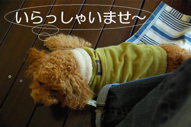 2007.11.24中目黒 038 (Small)