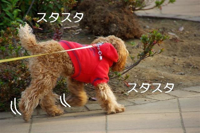 秋散歩 003 (Small)