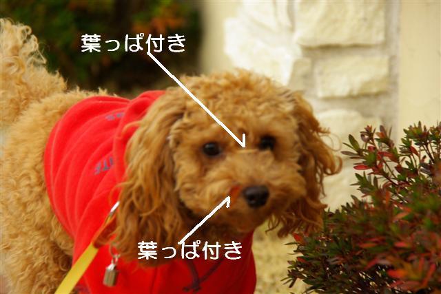 秋散歩 059 (Small)