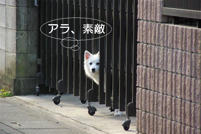 ライオン 007 (Small)