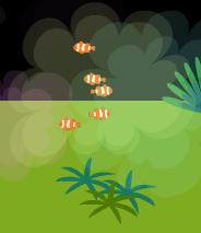 5回目、小っこい熱帯魚