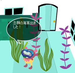 念願の海草ちゃんたち