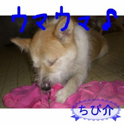 20060911230431.jpg
