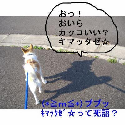 20061105184109.jpg