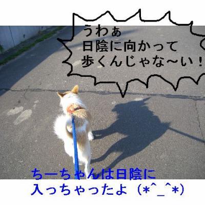 20061105184143.jpg