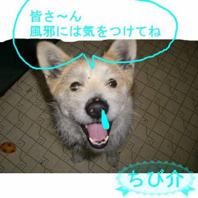 20061111201347.jpg