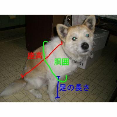 20070305213158.jpg