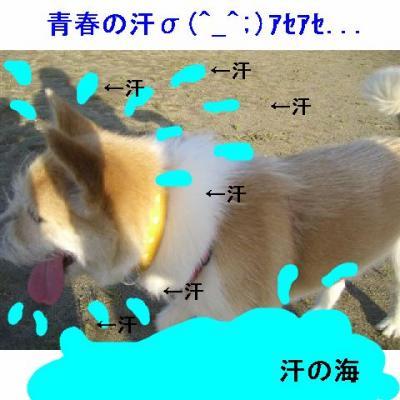 20070716214311.jpg