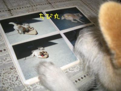 PVnyPXGE.jpg