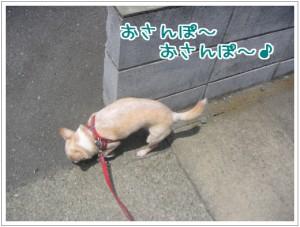 おさんぽ~2