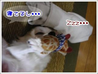 寝てんだ。。
