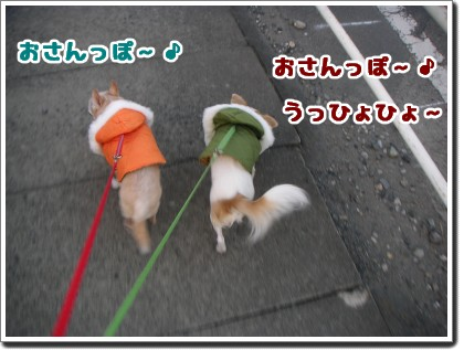 お散歩だぁ~♪