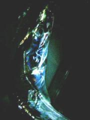 20071003.jpg