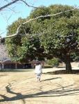 071210この木なんの木?
