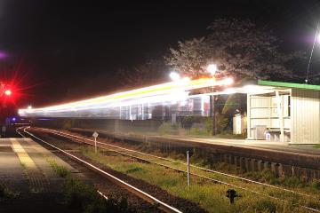 桜紀行2011(51)