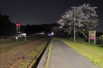 桜紀行2011(53)