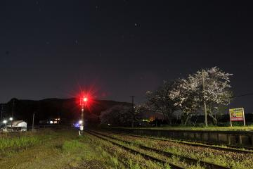 桜紀行2011(54)