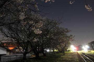 桜紀行2011(55)