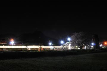 桜紀行2011(64)