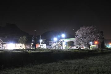 桜紀行2011(65)