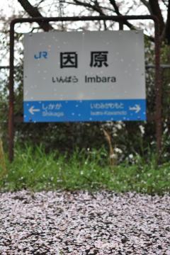 桜紀行2011(77)