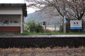 桜紀行2011(79)