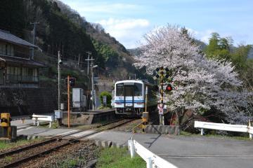 桜紀行2011(87)