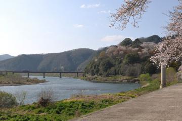 桜紀行2011(89)