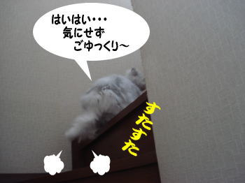 bu-cha1.jpg