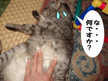 chimako10.jpg