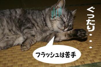 chimako2.jpg