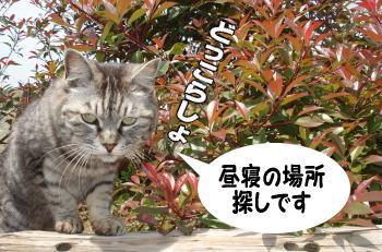 chimako4.jpg