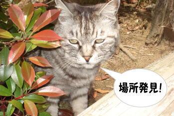 chimako5.jpg