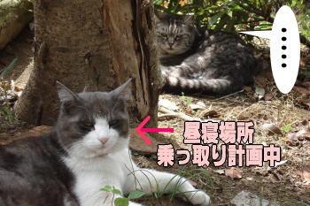 chimako7.jpg