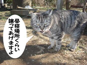 chimako8.jpg