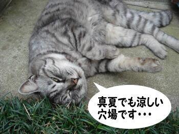 chimako9.jpg