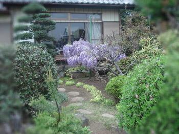 fujinohana.jpg