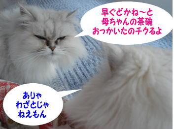 gin-momoko1.jpg
