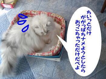 gin-momoko2.jpg