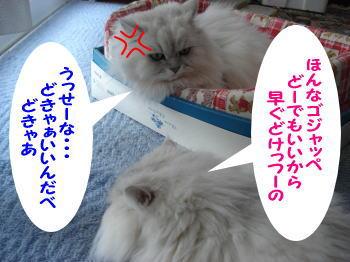 gin-momoko3.jpg