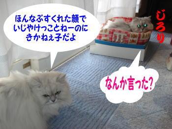 gin-momoko4.jpg
