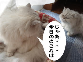 gin-momoko7.jpg