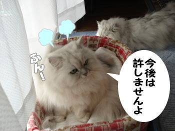 gin-momoko9.jpg