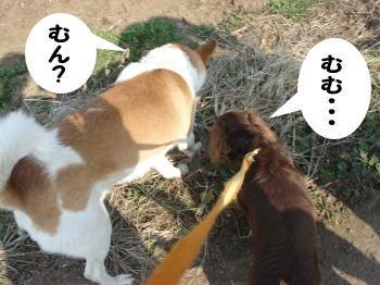 katsu-kai3.jpg