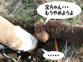 katsu-kai5.jpg