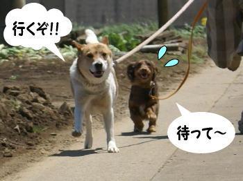 katsu-kai6.jpg
